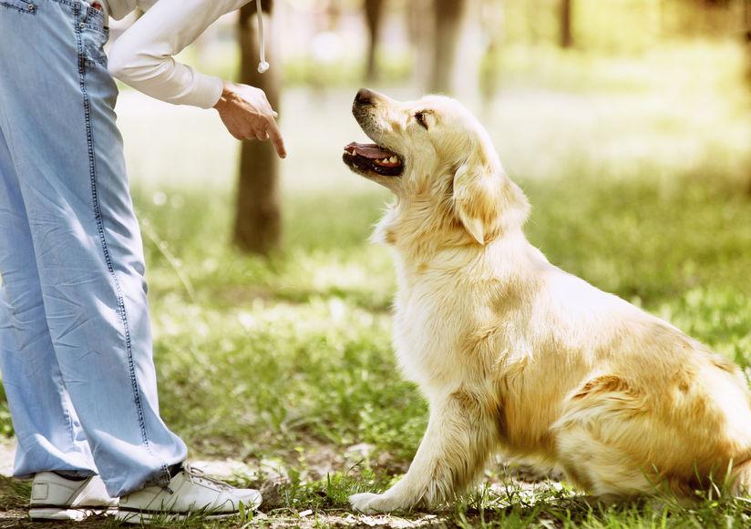 כלבים בכיף עם אביגיל בקוביץ